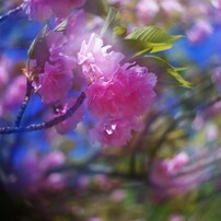 フラワー!春が来た