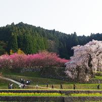 花 ~ flowers ~