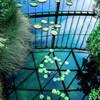 温室内の池