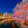 cherry tree at evening Ⅵ