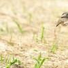 Wild Birds 5