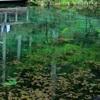 モネの池 映り込み