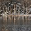 早春の水没林