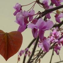 花 植物 4