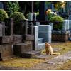 「ふとしたきっかけ」 小江戸川越散歩162
