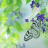 花園の妖精