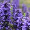 紫色のアリにとっての大木