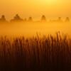 霧降る葦原