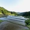 四谷千枚田の春