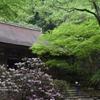 新緑の室生寺