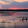 印旛沼・朝景 - 朝の光に導かれ -