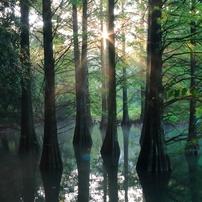 朝光射す不思議の森
