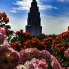 薔薇とドコモタワー