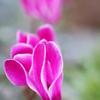 「おこしやす」をお花でイメージしたら・・・
