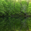 月沼の新緑
