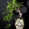 盆栽はペットです
