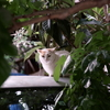 緑の中の猫