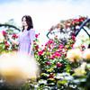 「薔薇の刺と、薔薇の花びら」