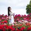「rose field」