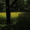 黄色に染まる森