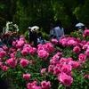 180515植物園24+