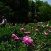 180515植物園37+