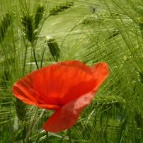 花 植物 5