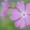 花便り - 晩春のやさしさ -