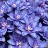 purpleも好きよ
