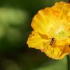 蜜蜂ブンブン
