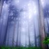 樹影の霧幻