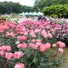神代植物公園バラ園