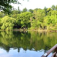 新緑の井の頭池