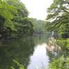 新緑の井の頭池3