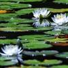 白い花びら 心を映す