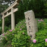 浜の神社の紫陽花三昧