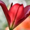 花弁の裏側に見えた美しい世界
