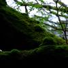 深い緑の世界