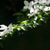 花便り - 爽やかな白花 -