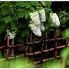「雨の日の撮影グッズ」小江戸川越散歩177