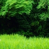 グリーン、フレッシュ(3)