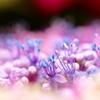 紫陽花のささやき。。。