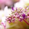 紫陽花のアクセサリー