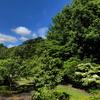 山法師の咲く公園