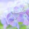 Light purple gradation