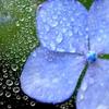 雨中の花宇宙Ⅱ