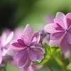 Flower crown❁