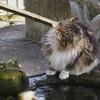 水のある風景 35 【猫】