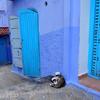 青い街の猫