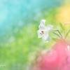 fantastic lily